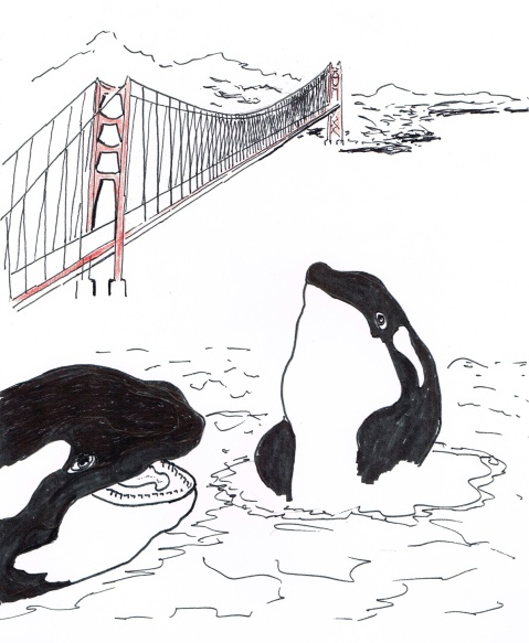 Tagged male Killer Whale being tracked by scientists, races south to San Francisco, only to reverse course.