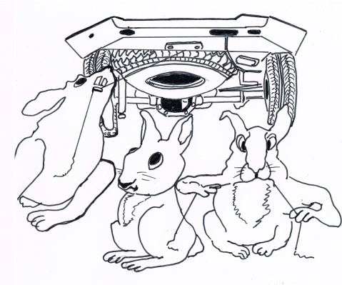 Rascally rabbits are eating cables and wiring from parked cars at Denver International Airport