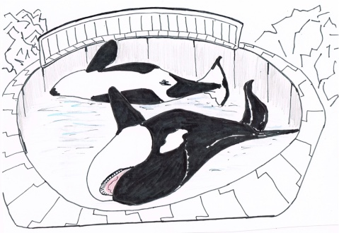 Russia's plans to display 2 captured Orcas at the Sochi Olympics have provoked international outrage