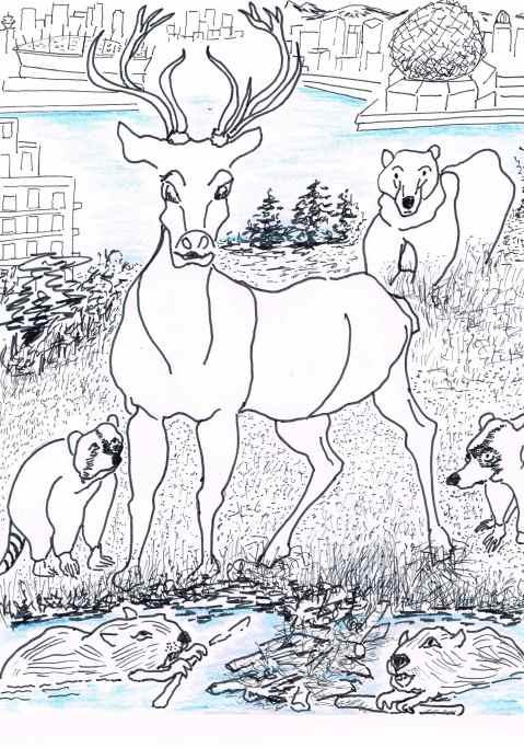'Wildlife returning to the city.'[Headline--The Vancouver Sun .]